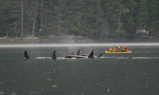 Family-with-killer-whales