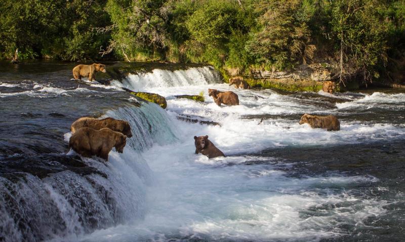 Brooks Falls - Katmai National Park